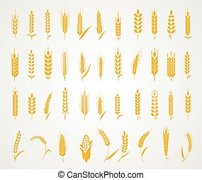 Ears of wheat bread symbols. - Cereals icon set with rice,...