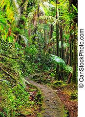 El Yunque path