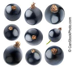 Colección, aislado, Grosellas negras