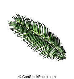 Full fresh leaf of sago palm tree, sketch vector...