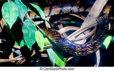 skin of danger snake animal - close up skin of dangerious...