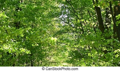 woods forest. trees background. green nature landscape....