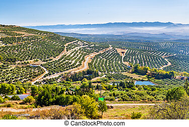 Landscape with olive fields near Ubeda - Spain, Andalusia