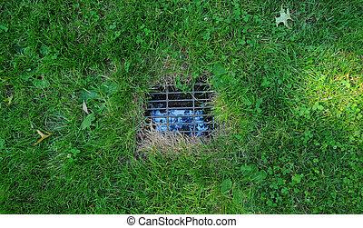 Yard Drain - A closeup of a yard drain in a green grass...