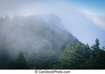 Pine trees and rocky summit in fog, at Grandfather Mountain,...