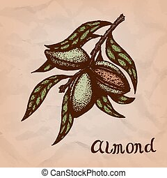 Vector colorful illustration of almond nuts. Vector...