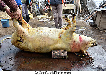 Slaughter washing the skin of the pig to remove the hair -...