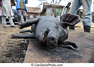 Slaughtered pig. Burned pig prepared for traditional...