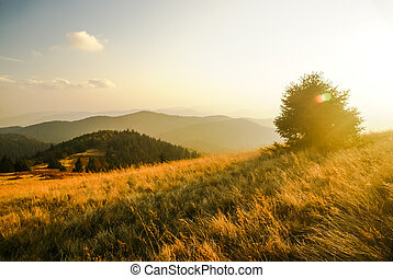 Low Fatra region - Photo of large field with tree and...