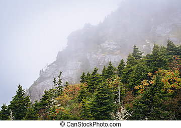 Trees and rocky slopes in fog, at Grandfather Mountain,...