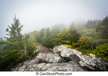 View of trees in fog from Black Rock, at Grandfather...