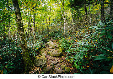 The Black Rock Nature Trail, at Grandfather Mountain, North...