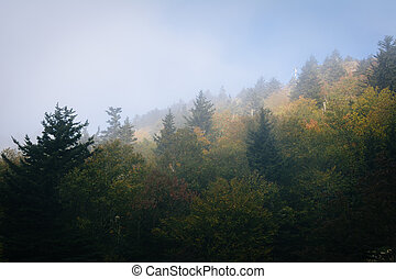 Trees in fog, at Grandfather Mountain, North Carolina.