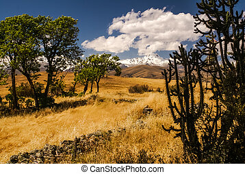 Cordillera Negra in Peru - Photo of field with trees and...