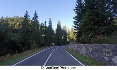 Driving to a evergreen forest in the summer
