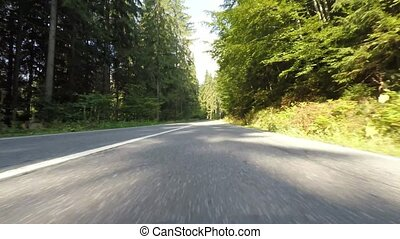 Speeding car trough fir forest, front camera video