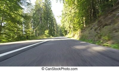 Evergreen forest road - Evergreen forest in Romania, front...