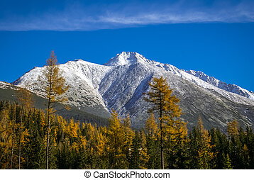 Nature in Strbske pleso - Photo of mountains covered in snow...