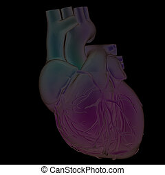 Human heart and veins. 3D illustration.