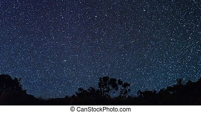 Silhouette of trees against a background of stars. TimeLapse