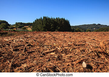Deforestation in Spain - View of the deforestation in the...