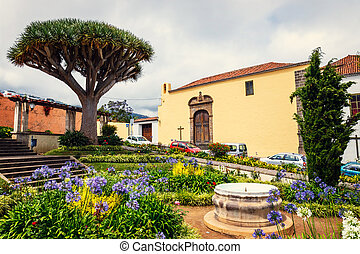 the historical center of La Orotava town with drago tree,...