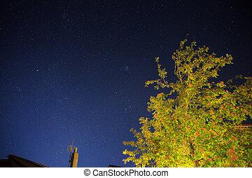 Tree on stellar sky - Night view of tree on stellar sky