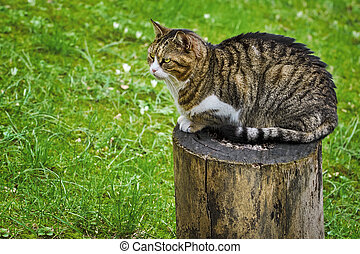 Cat on a Tree Stump - Alley Cat Resting on a Tree Stump