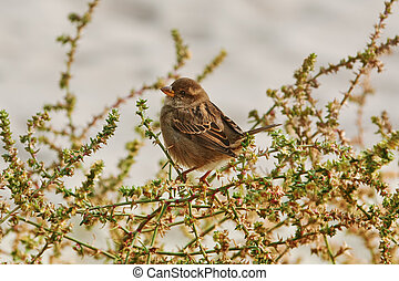 Sparrow on the Shrubbery - Sparrow Perched on the Shrubbery