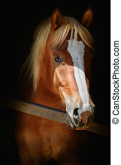 Portrait of Horse - Portrait of a Horse in the Stable