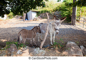 Donkeys in the stable - Donkey and baby donkey in the stable