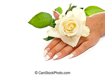 Hand with rose - Hand with manicured nails and rose. White...