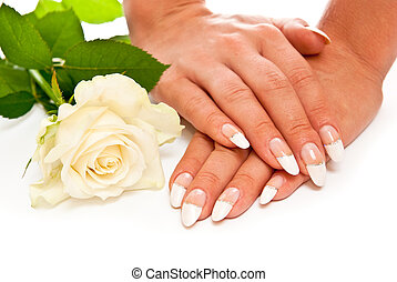 Hands with rose - Hands with manicured nails and rose White...