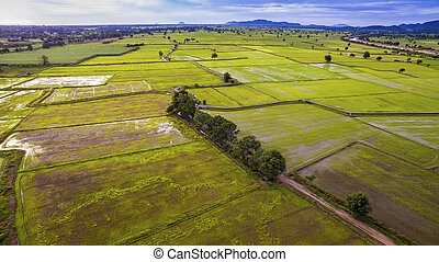 aerial view of rice paddy field in kanchanaburi thailand