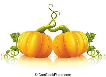 two orange pumpkins with green leaves vector illustration,...