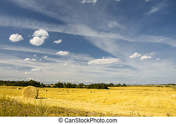 amazing golden hay bales on sunny day