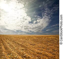 potato field on a sunset under blue sky