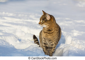 Cat in snow - Cat out in the snow in winter season