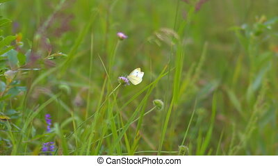 white butterfly sitting on a flower
