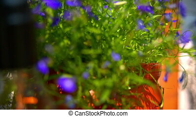 blue flowers in interior decoration.