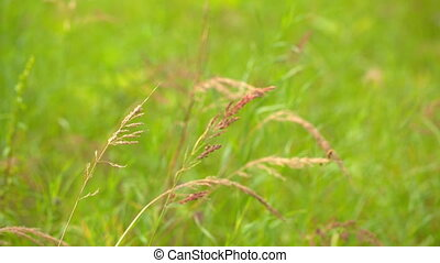 Red grass on green background