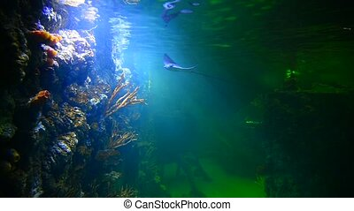 Stingray and turtle in deep-water aquarium - Stingray and...