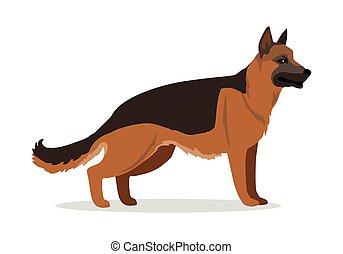 German Shepherd or Alsatian Wolf Dog Isolated.