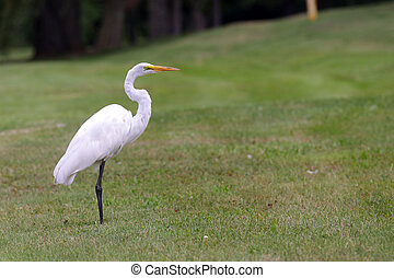 Tropical crane - Beautiful tropical crane in the middle of...