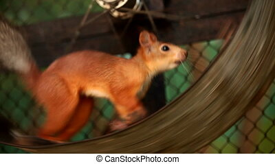 Squirrel in a cage - Funny squirrel in a cage