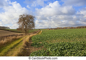 yorkshire wolds bridleway - a scenic bridleway with an ash...