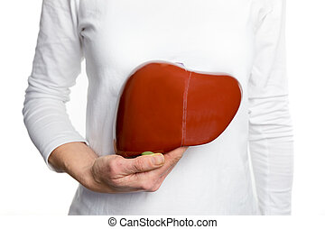 Woman holding human liver model at white body - Female...