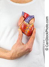 corazón, pecho, modelo, tenencia, mano
