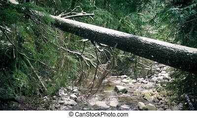 Log Over River In Winter Forest - Large fallen tree over a...