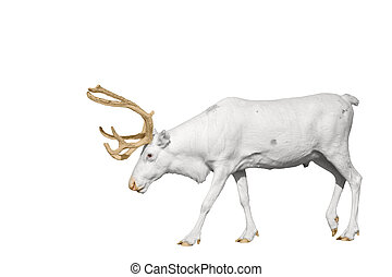 rare white deer with golden horns isolated on white,wild...